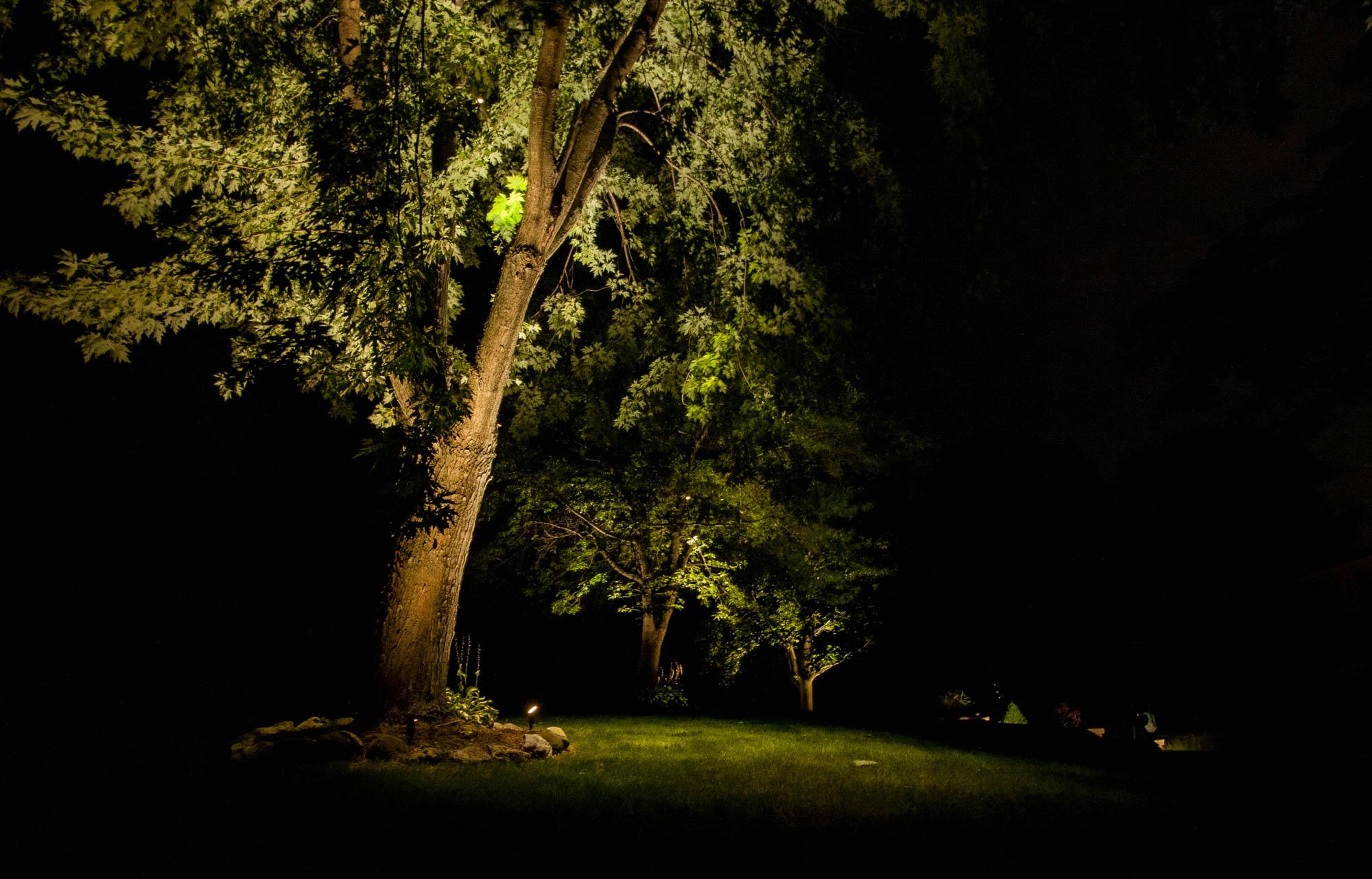 pewaukee landscape outdoor lighting night owl specimen mature trees