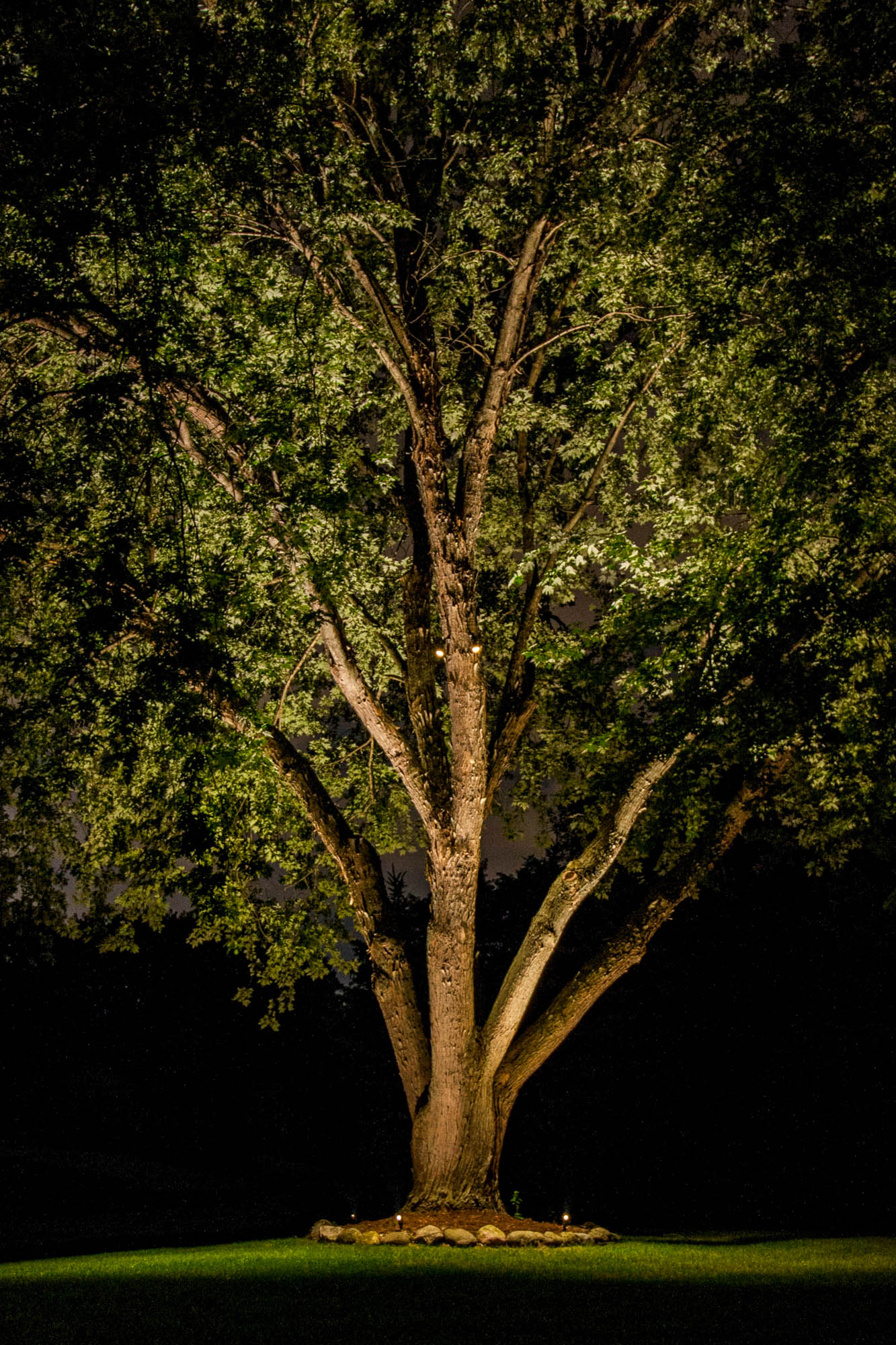 pewaukee landscape outdoor lighting specimen plants