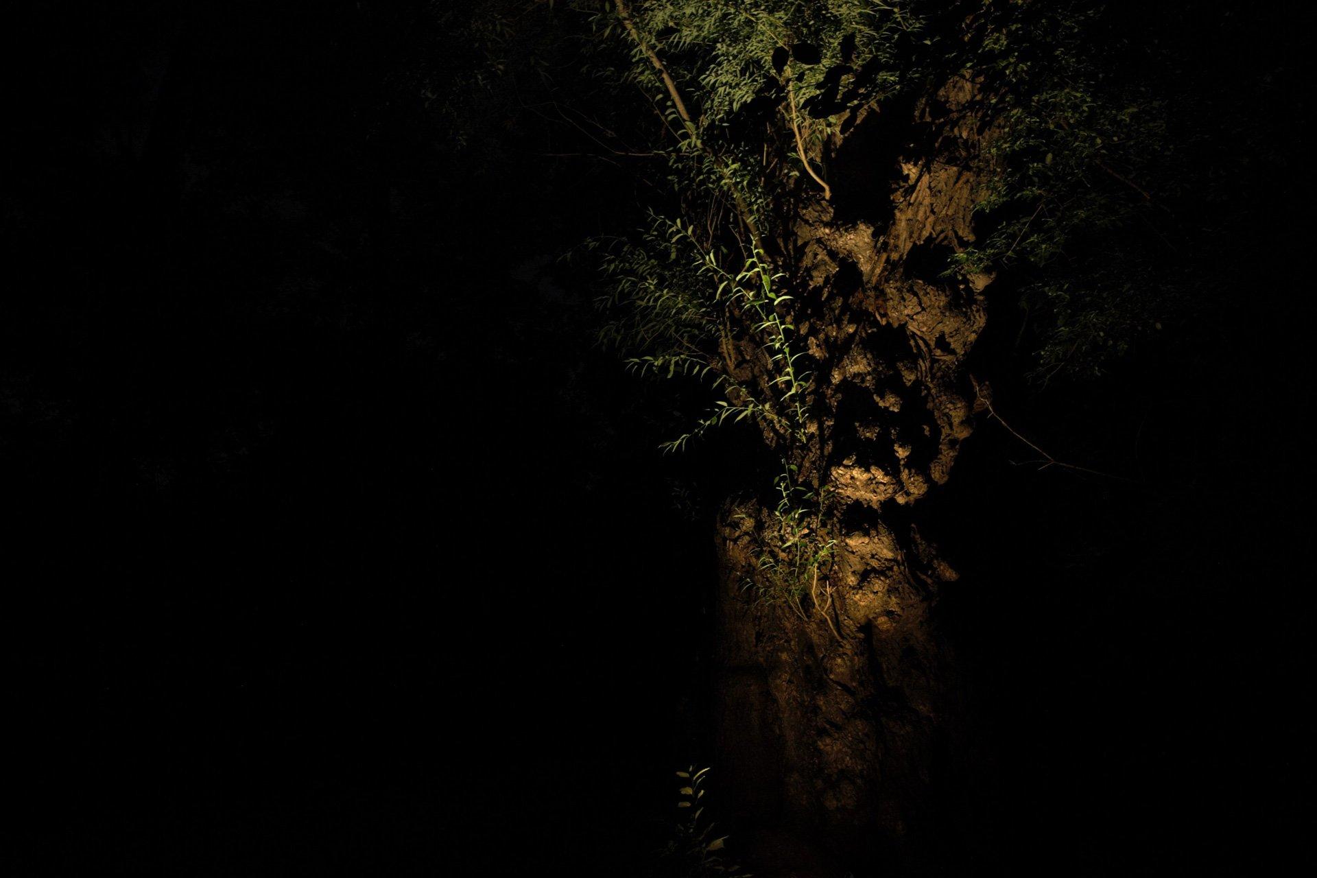 night owl landscape lighting boerner botanical gardens nature tree uplight foliage bark texture