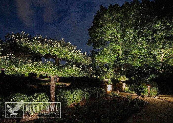 plants growing around landscape lighting systems need regular maintenance